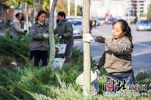 张家口养护冬季树木确保安全过冬